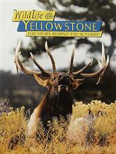 Wildlife@Yellowstone: The Story Behind the Scenery